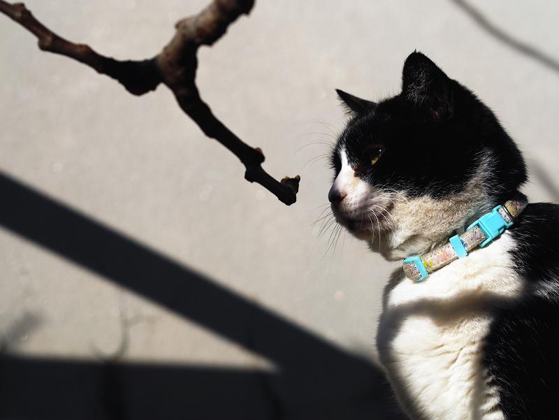 冬の陽射しと猫の視線1