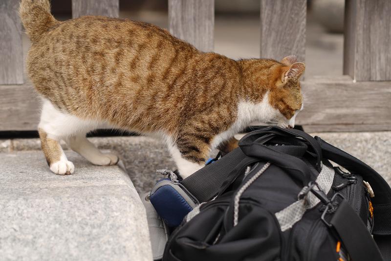 バッグに乗ろうとする猫