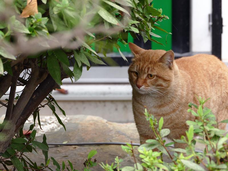 睨まれてた茶白猫