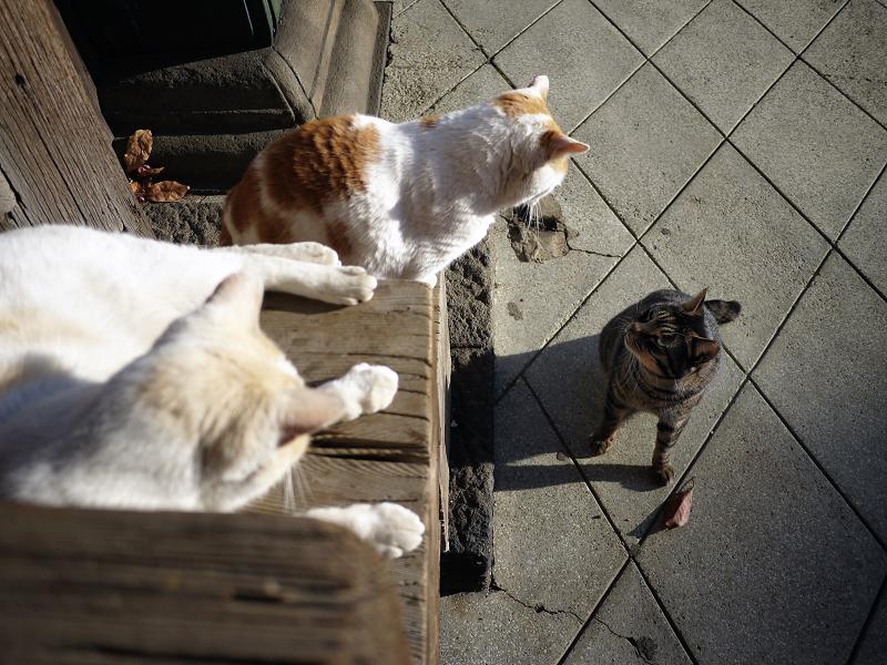 階段の端の出来事の猫たち2