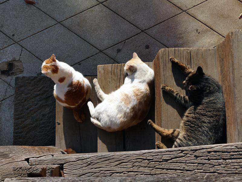 階段の端の出来事の猫たち3