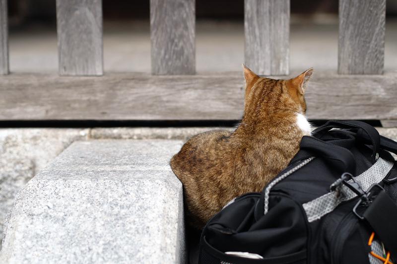 カメラバッグに乗った猫1