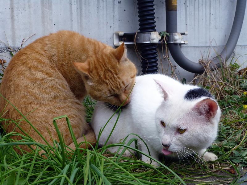 仲良しの茶白猫と白黒猫