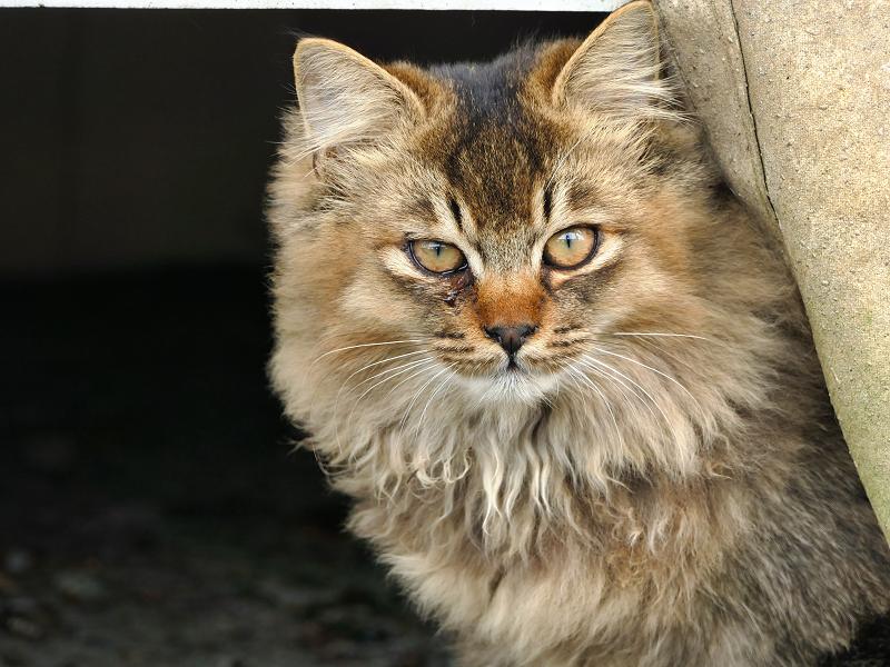 帆布の隙間から覗いてる猫2