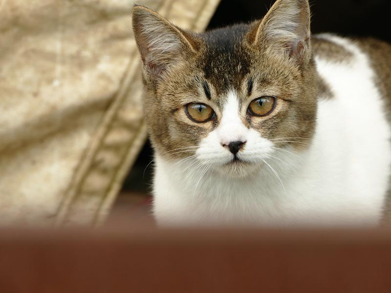 帆布の隙間から覗いてる猫3
