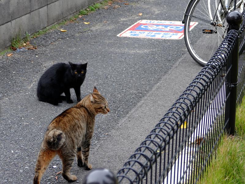 公園を睨むキジトラ猫