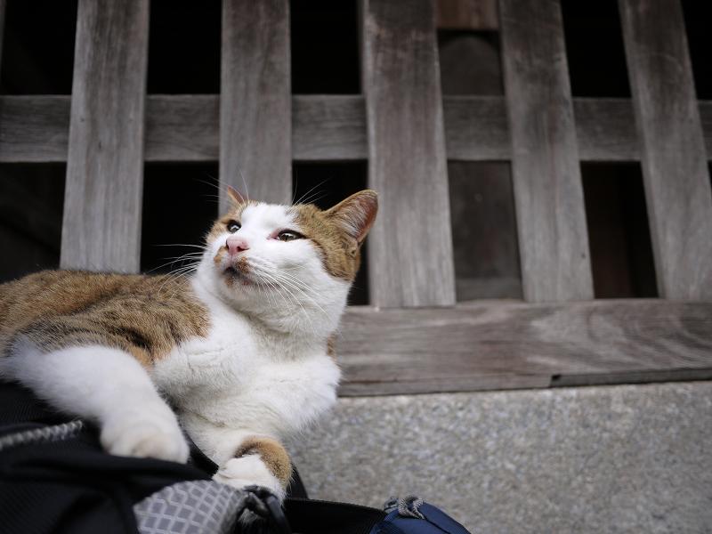 バッグの上で遊ぶ猫1