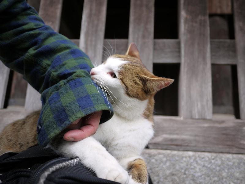 バッグの上で遊ぶ猫2