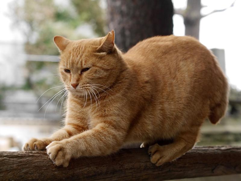 欄干で爪を研ぐ猫
