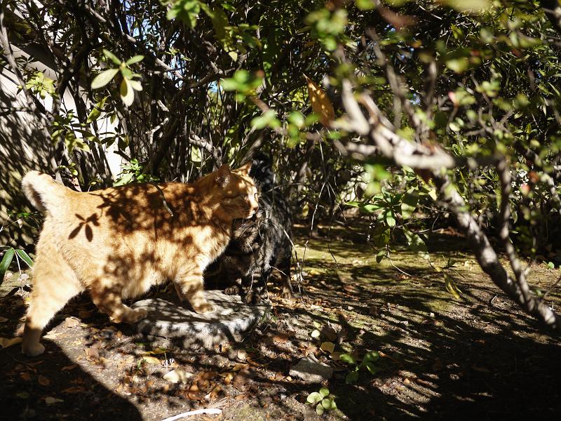 木漏れ日が激しい茂みの中の猫1