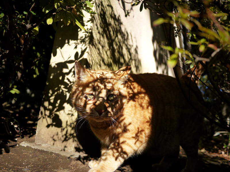 木漏れ日が激しい茂みの中の猫2