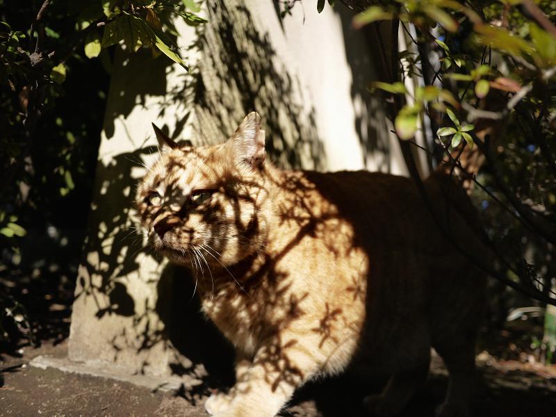 木漏れ日が激しい茂みの中の猫3