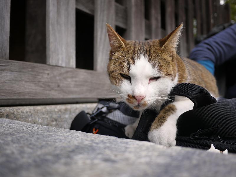 カメラバッグで寛ぐ猫2