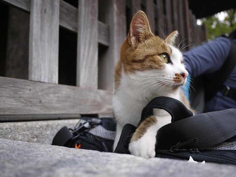 カメラバッグで寛ぐ猫3