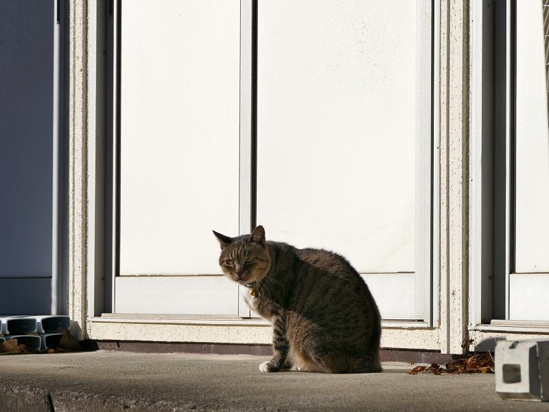 動き始めるキジトラ猫1