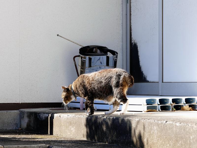 動き始めるキジトラ猫2