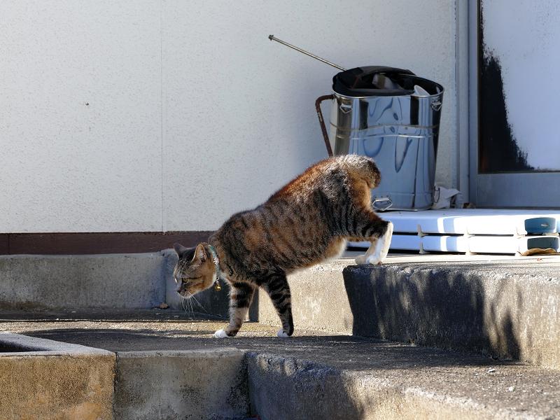 動き始めるキジトラ猫3