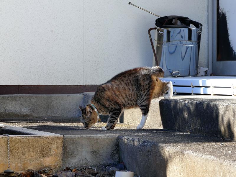 動き始めるキジトラ猫4