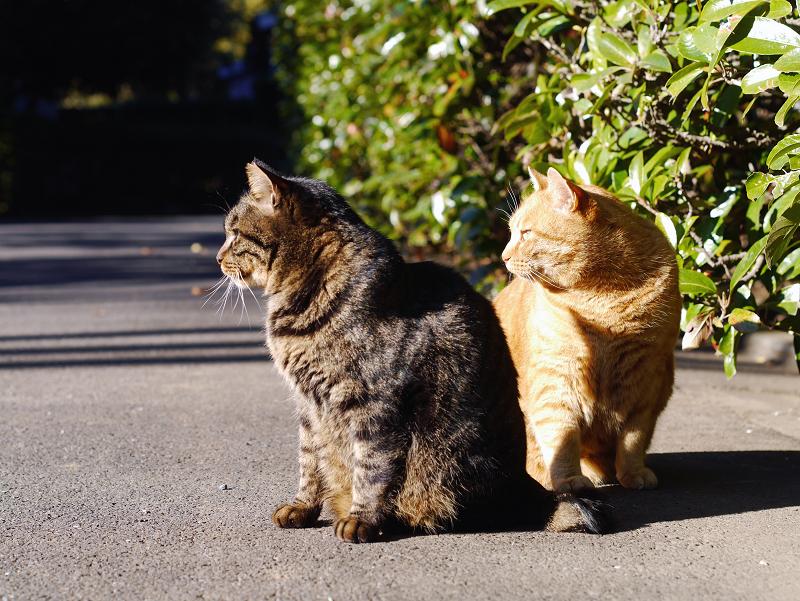 茂みの前のキジトラ猫と茶トラ猫2
