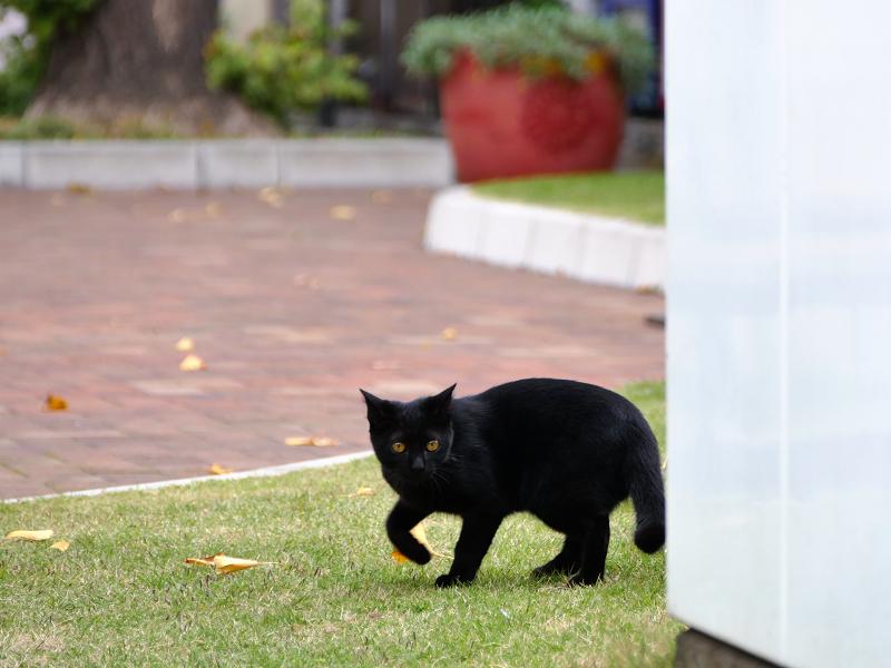 公園の黒猫