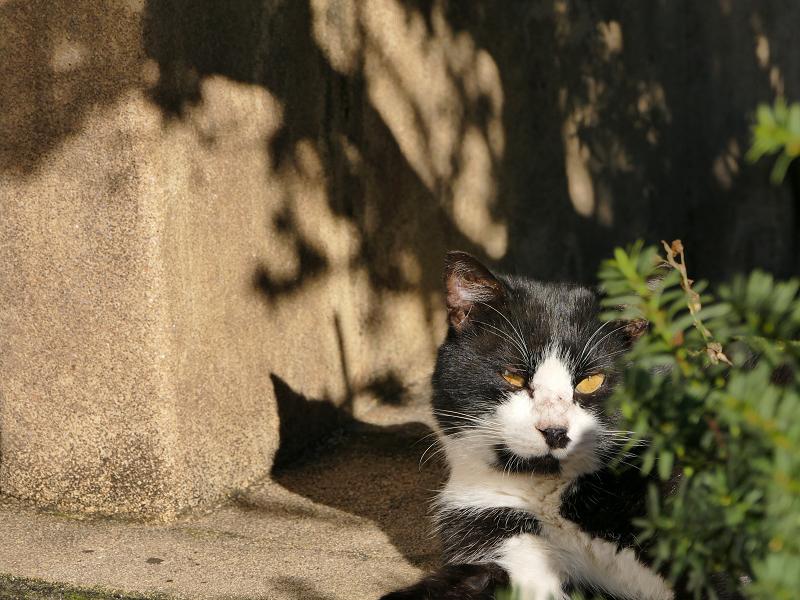 陽射しの中黒白猫