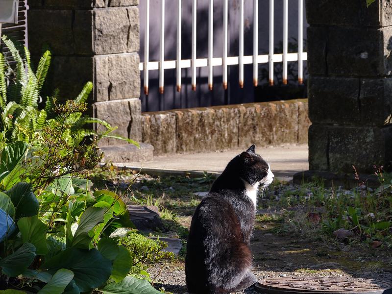 門前で佇む黒白猫