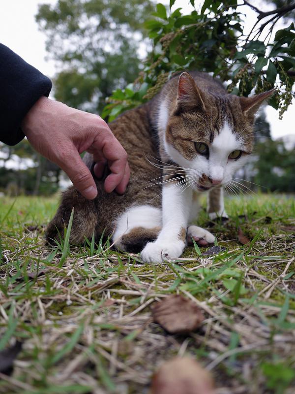 不愉快顔の猫