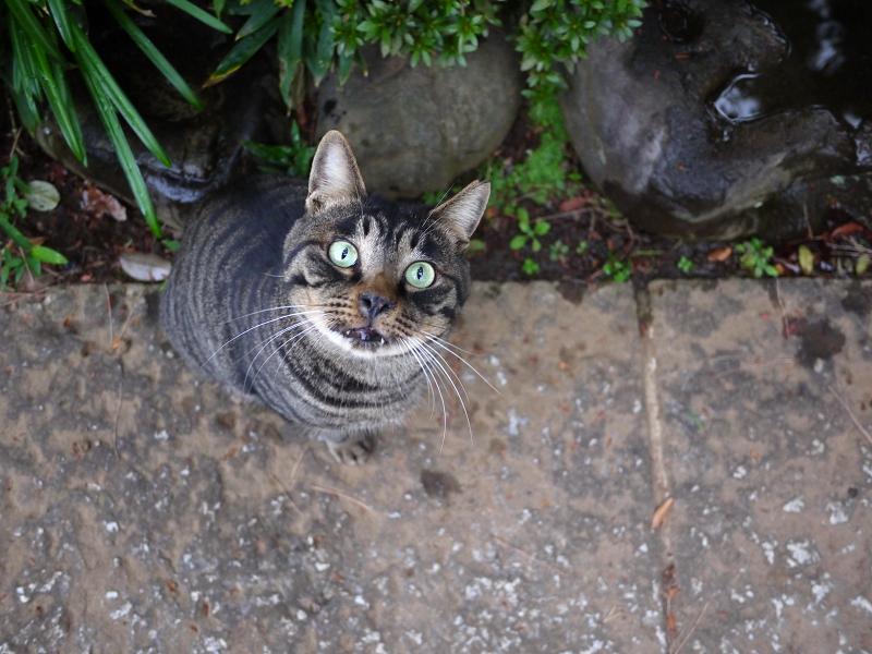 まん丸目玉で上を向く猫