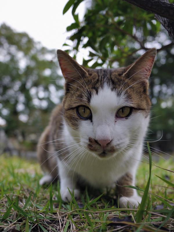 カメラを真剣に見つめる猫