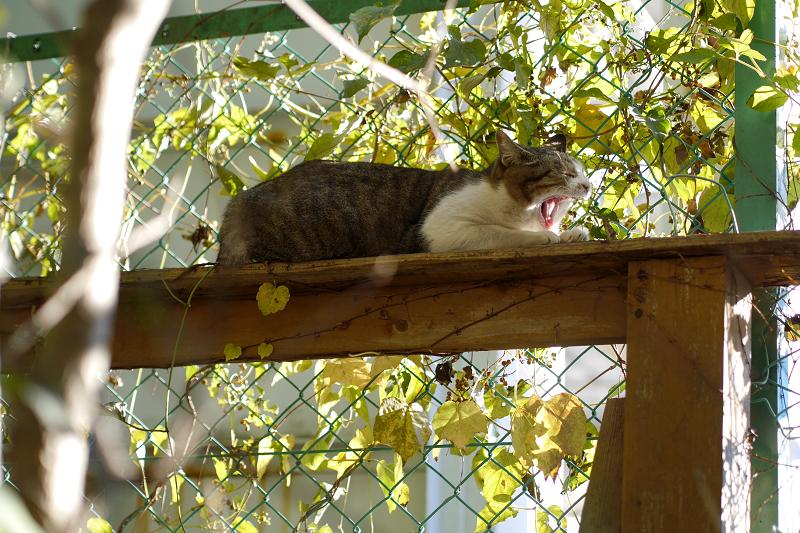 木漏れ日の中でアクビをする猫