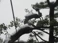 2016.1.18神奈川3