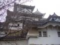 十月桜と姫路城