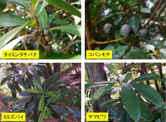 中町八幡神社樹木
