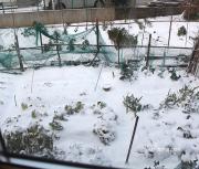 25日の雪