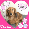 160214cocoa.png