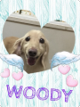 160214woody.png