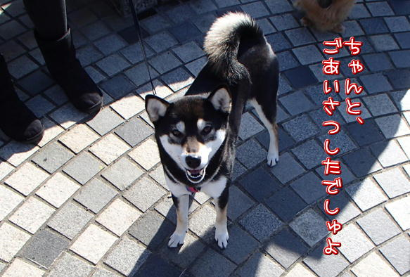 1_14_20160207164622f13.jpg