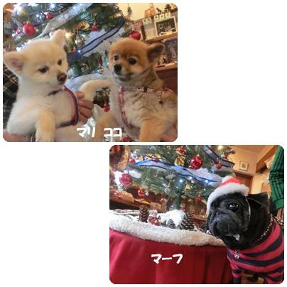 2015-11-108.jpg
