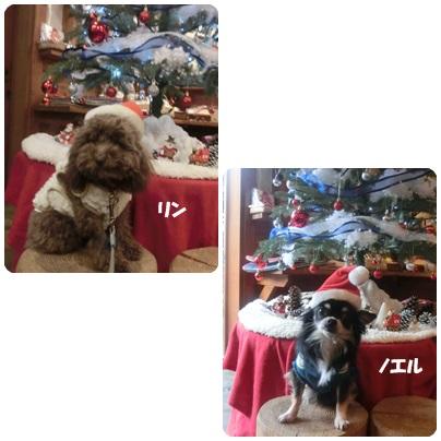 2015-11-117.jpg