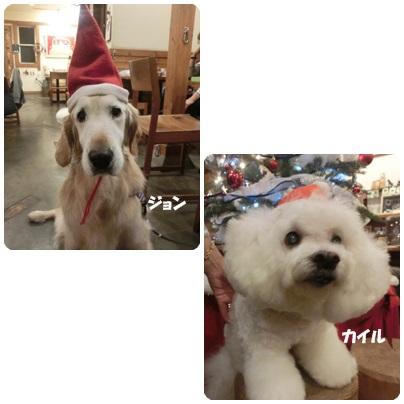 2015-11-131.jpg