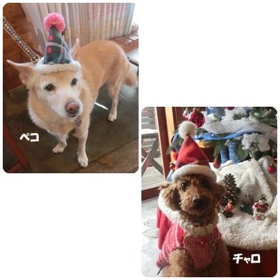 2015-12-104.jpg