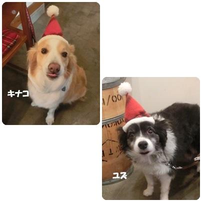 2015-12-105.jpg