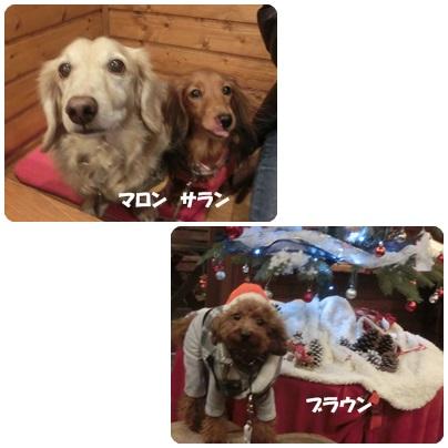 2015-12-11.jpg