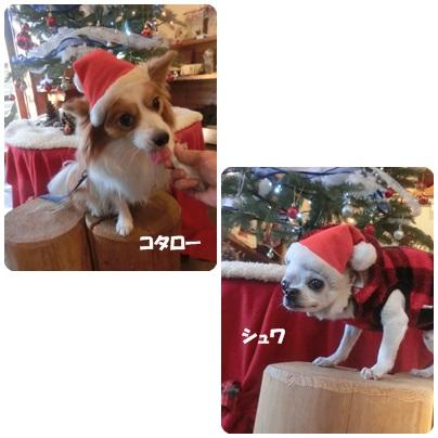2015-12-15.jpg