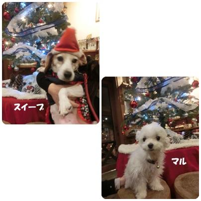 2015-12-57.jpg
