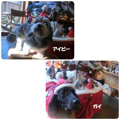 2015-12-80.jpg