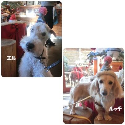 2015-12-84.jpg