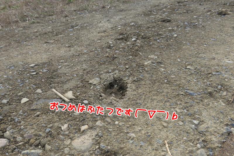 鹿の足跡1
