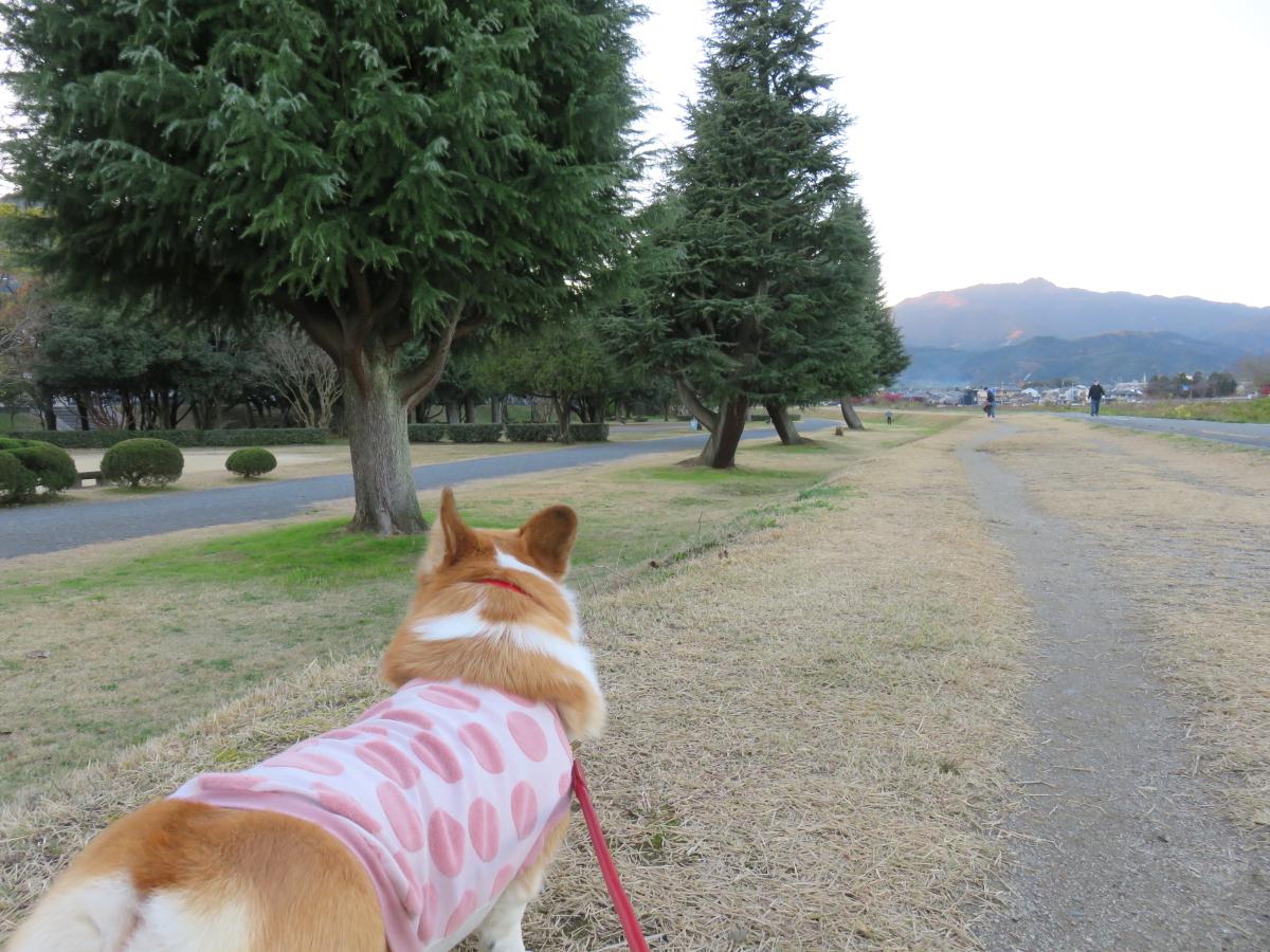 嵐山公園4