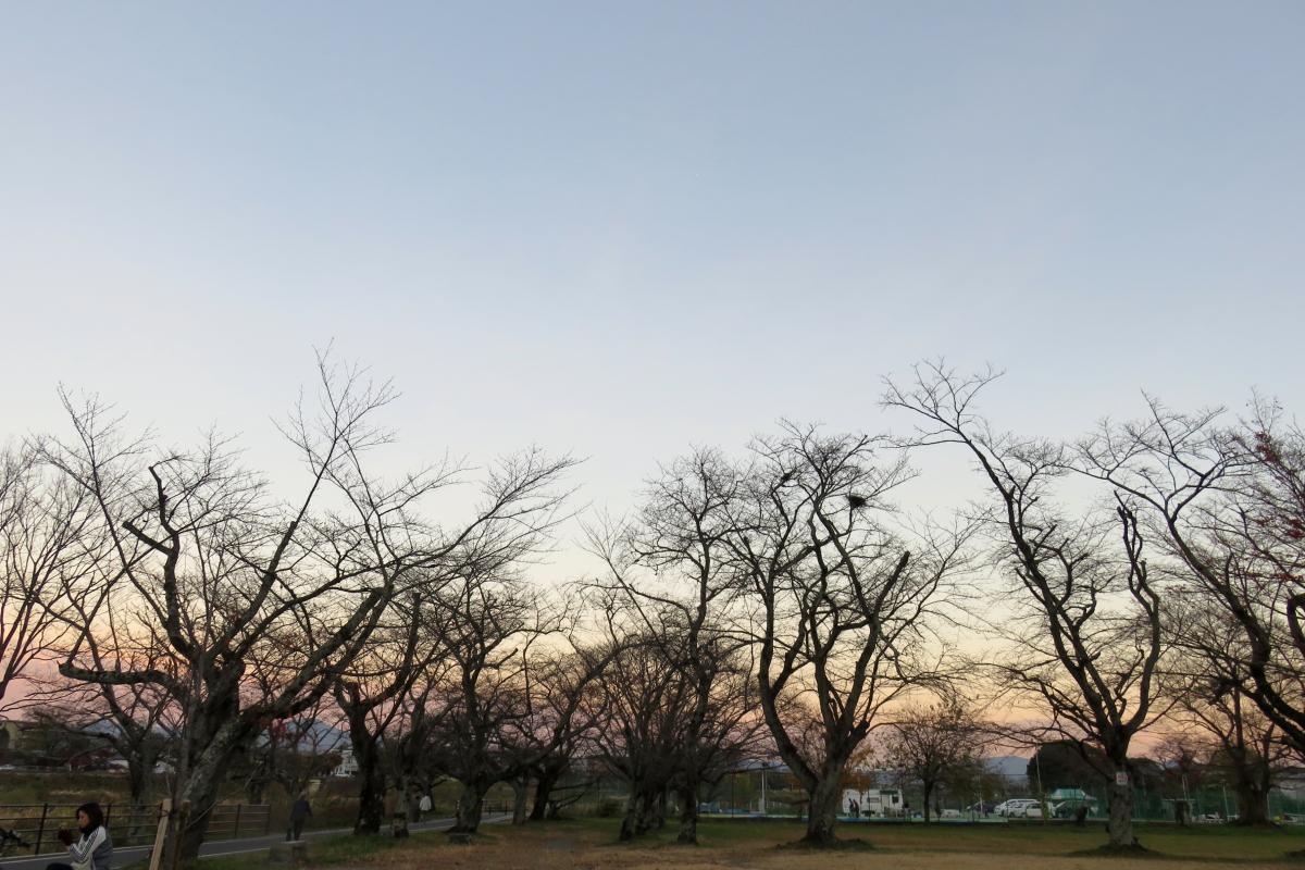 嵐山公園7